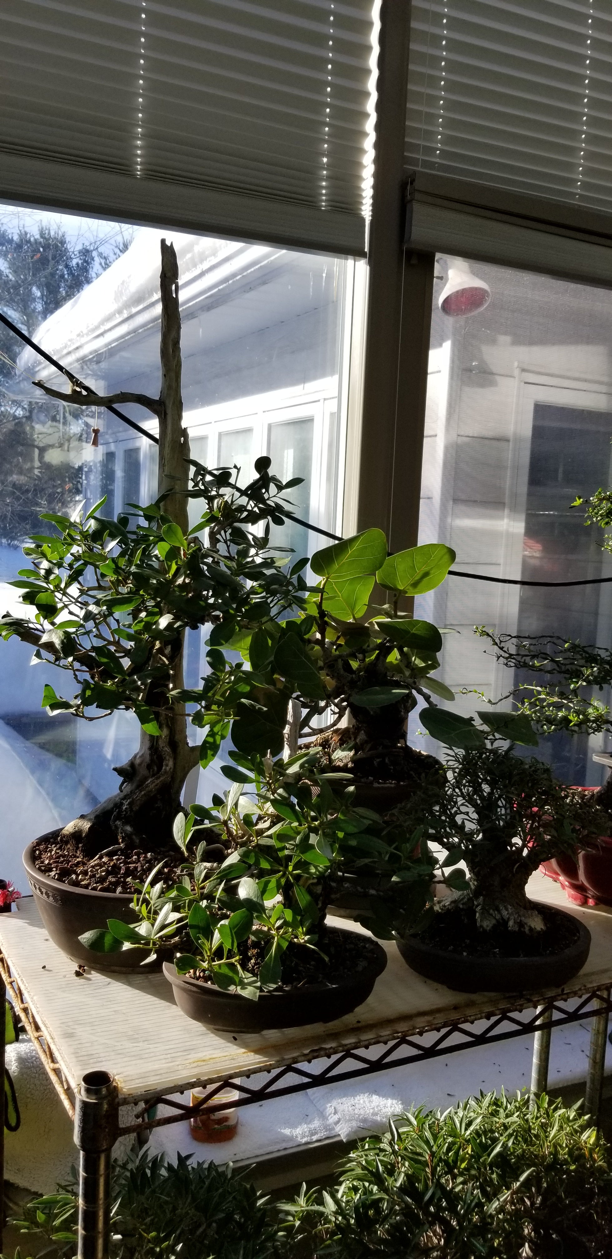 Interior bonsai
