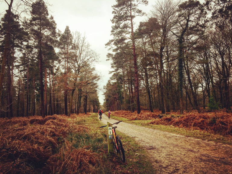 Exploring The New Forest #ReasonsToRide