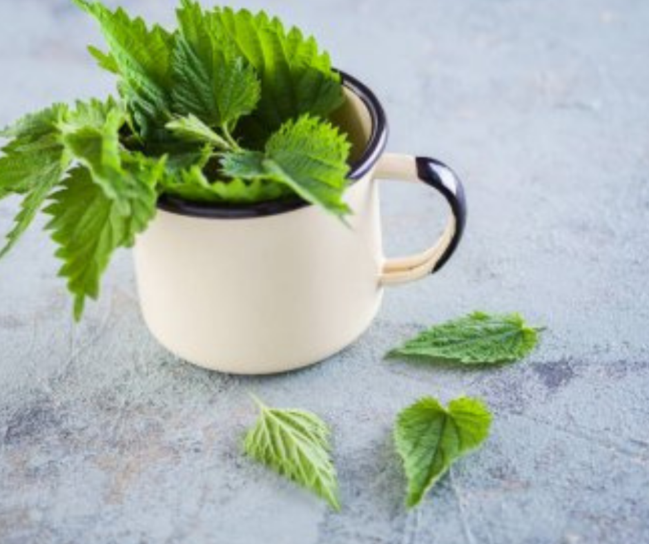 Dried Nettle Leaves: Top 5 Ways to Use Nettle