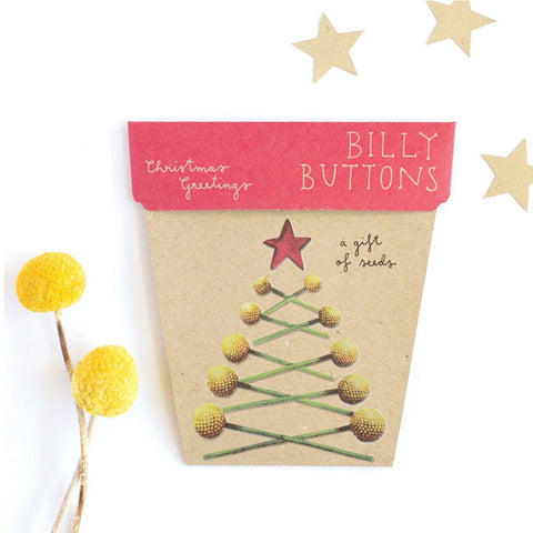Christmas Greetings Billy Buttons Gift of Seeds by Sow 'n Sow | Wild & Whimsical Things www.wildandwhimsicalthings.com.au