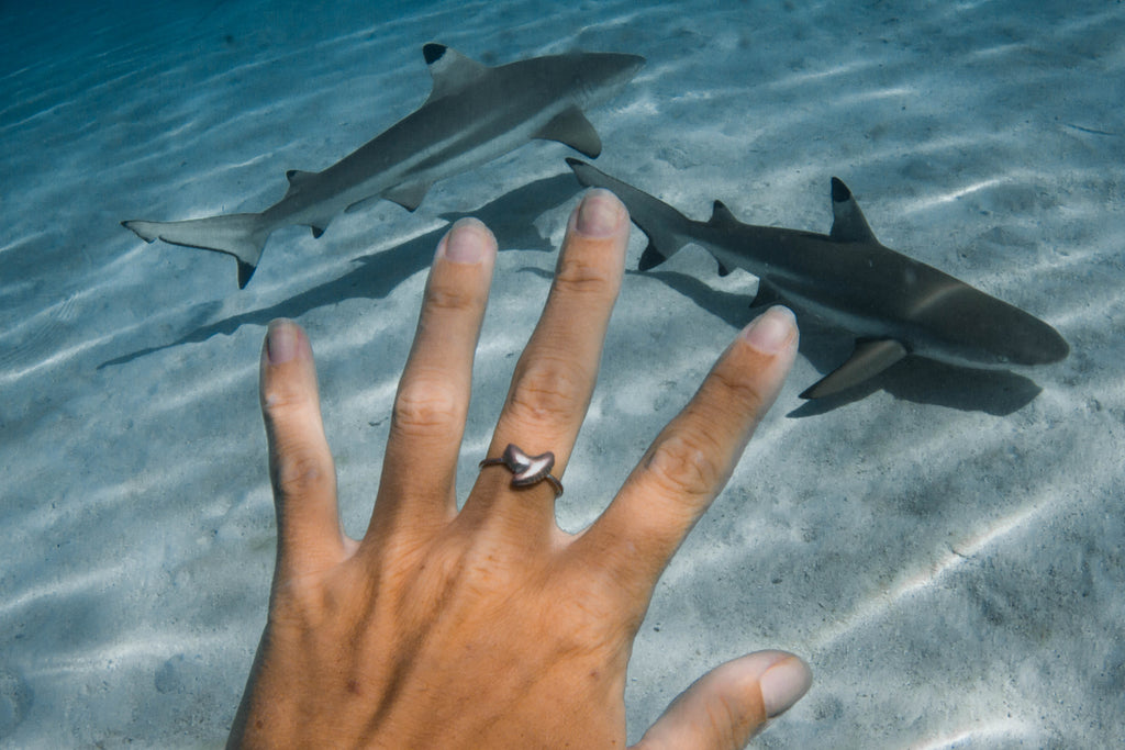 nikki ring tiger shark thessalonike collection one ocean diving