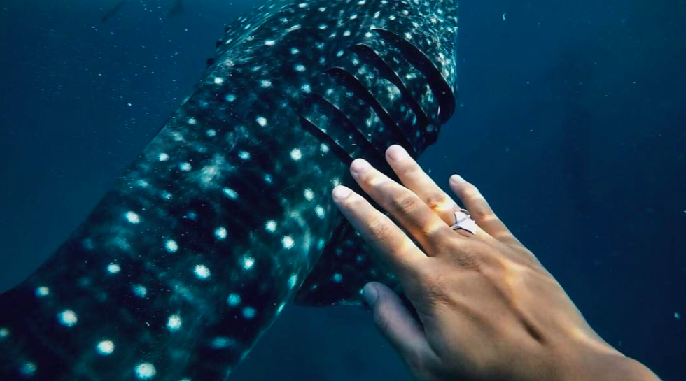 thessalonike collection hahalua ring whale shark manta ray wild aid keiko conservation