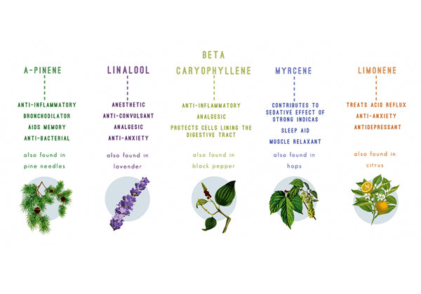 Common Terpenes