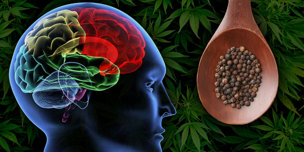 Terpenes and the Brain