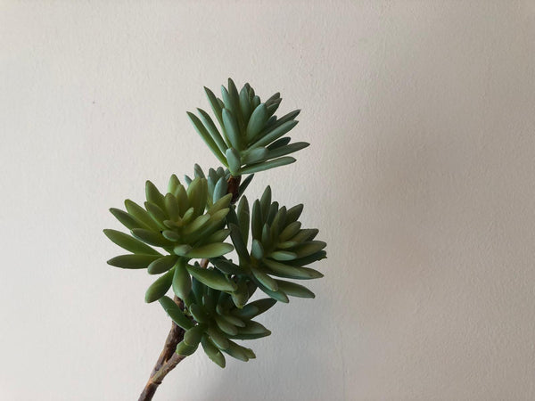 Faux Foliage - Succulents (Various Types Avail.)