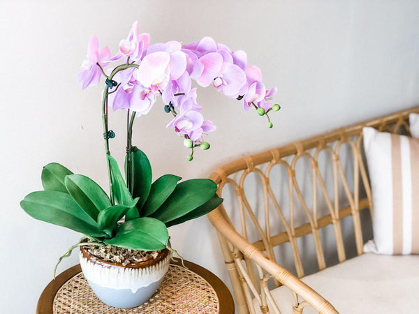Faux Purple Phalaenopsis in a Pot - 2 Stalks