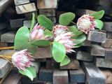 Faux Protea - Small