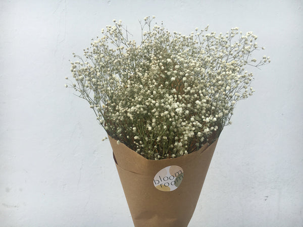 Dried Baby's Breath (Paper-Wrapped)