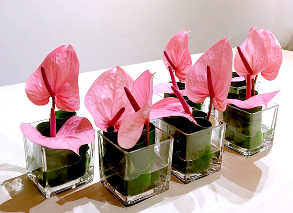 Pink Anthurium Cocktail Arrangement