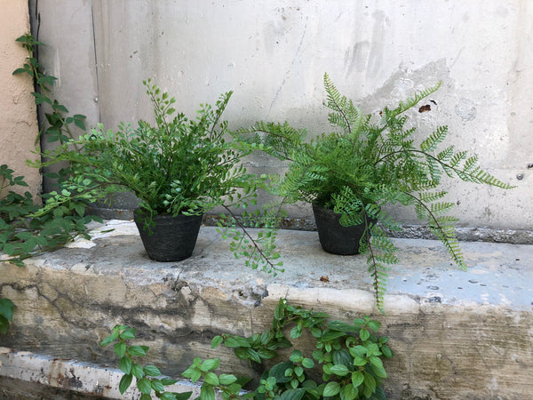 Faux Mini Potted Ferns