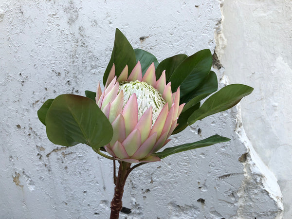 Faux Protea - Large, Other Colours Avail.