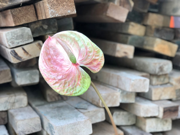 Faux Anthurium