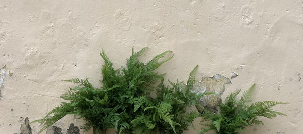 Faux Foliage - Soft Ferns