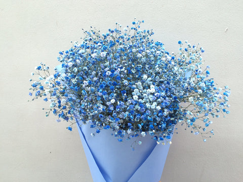 Baby's Breath in Blue