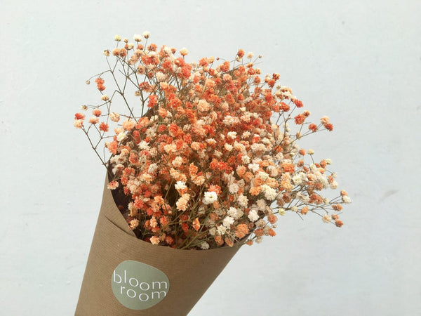 Dried Baby's Breath - Coloured