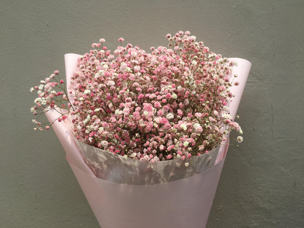 Baby's Breath In Blush Pink