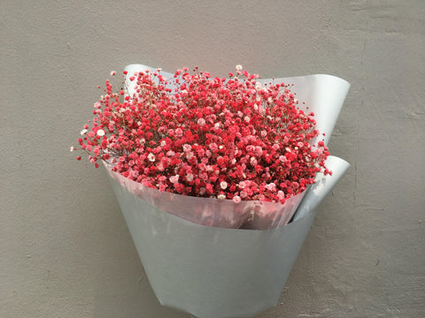 Baby's Breath in Bright Pink