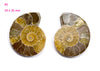 ammonite fossil cabochon for jewelry making