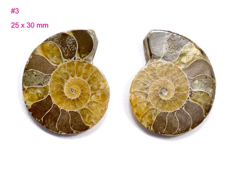 small ammonite fossil cabochon for jewelry making