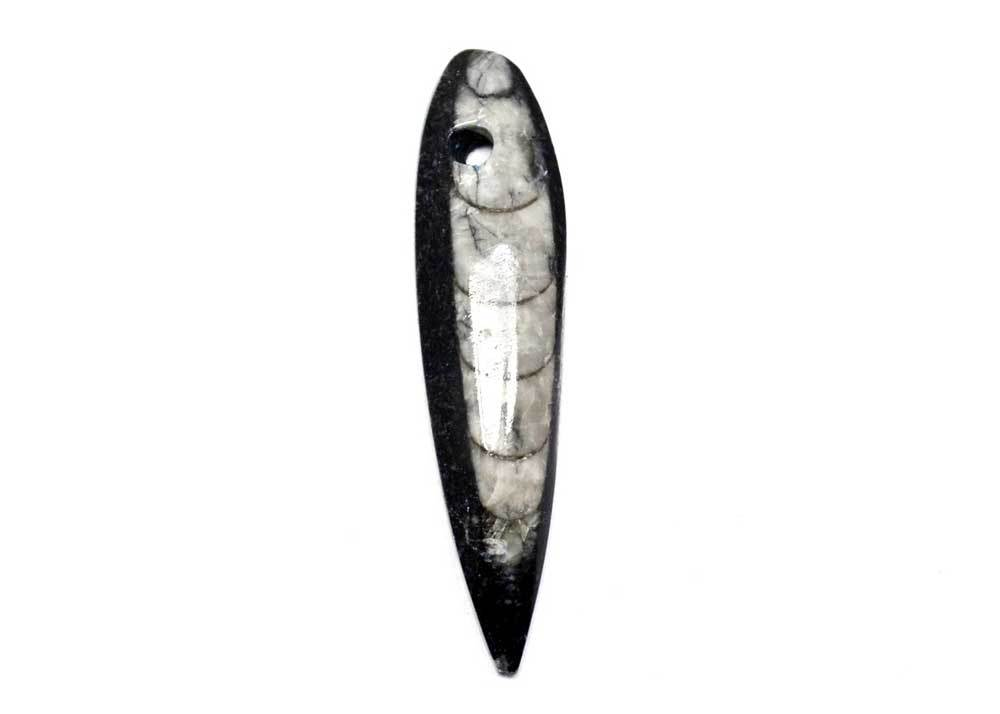 small orthoceras fossil cabochon for jewelry making