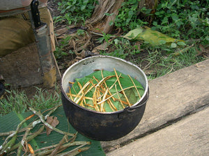 Racism and the Discrimination Against Traditional Ayahuasqueros by Anthropology Users in Academia by Danny Nemu