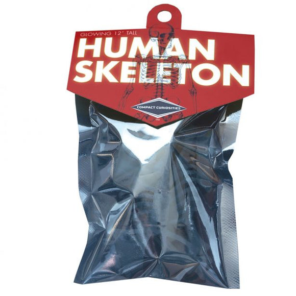 Compact Curiosities: Human Skeleton