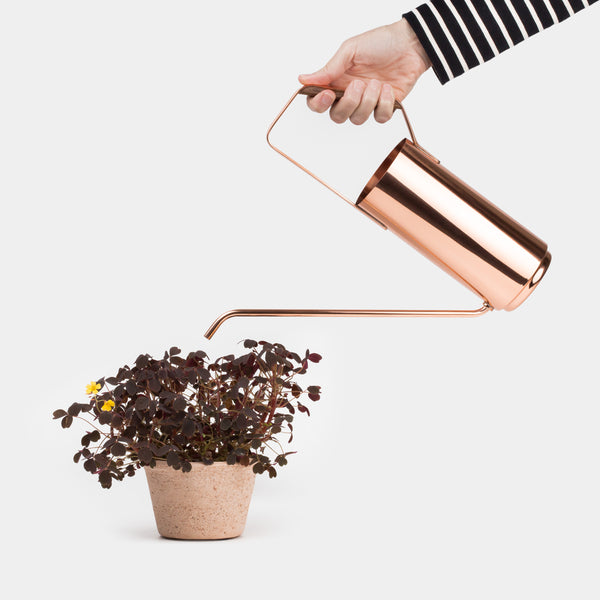 Kaenjusai Watering Can with plant