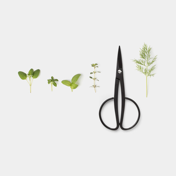 Kobayashi Harvester Scissors with herbs top