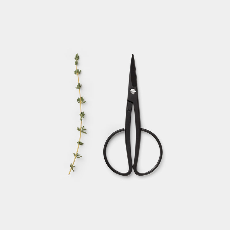 Kobayashi Harvester Scissors with thyme top