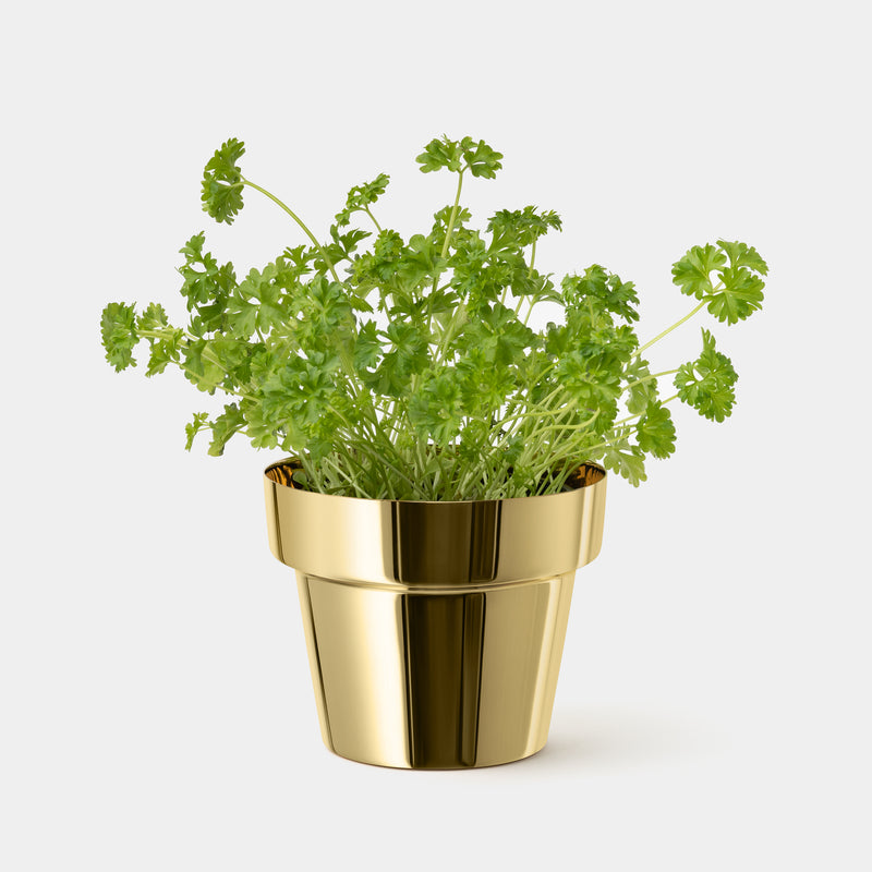 Skultuna Herb Pot