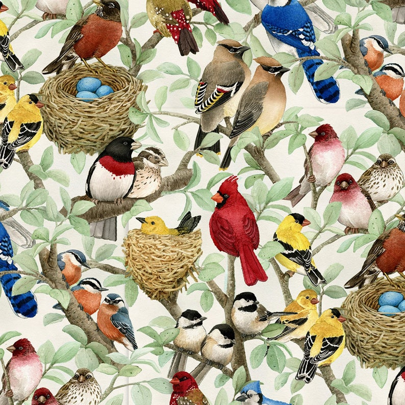 Face Mask with Filter Pocket:  Wild Song Birds