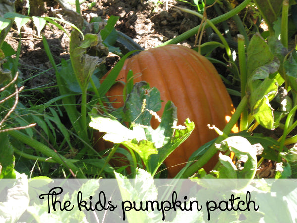 The kids pumpkin patch here at Lizzy Lane Farm