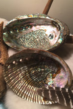 Load image into Gallery viewer, Abalone Shell- Smudge Shell - Lizzy Lane Farm Apothecary