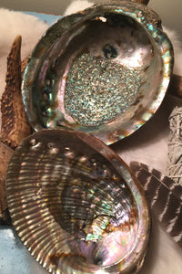 Abalone Shell- Smudge Shell - Lizzy Lane Farm Apothecary