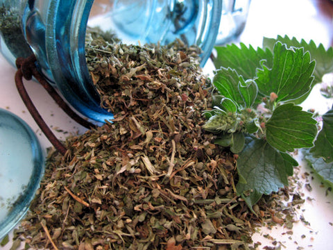 fresh dried organic catnip