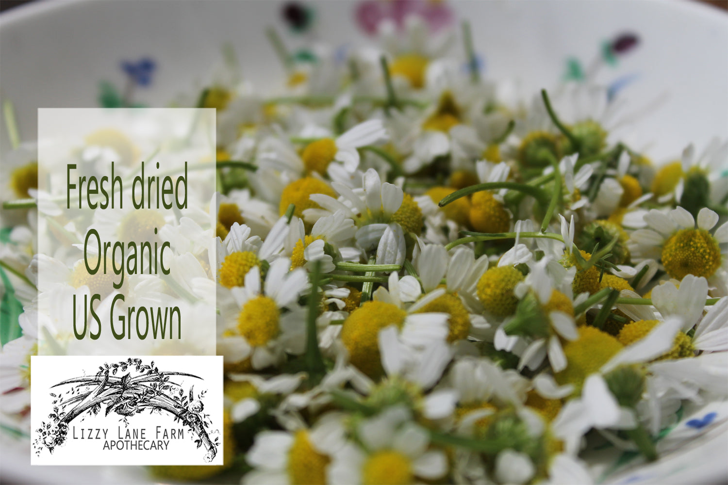 fresh chamomile flower tea