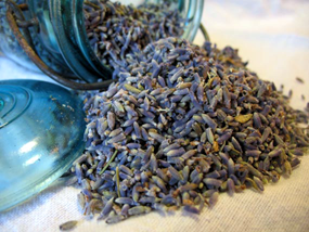 Lavender buds and flowers-Organic Culinary Quality - Lizzy Lane Farm Apothecary