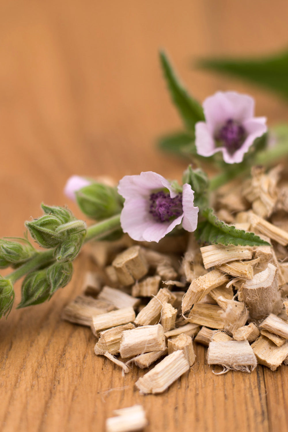 Marshmallow Root-Organic Fresh Dried. (Althaea Root) - Lizzy Lane Farm Apothecary