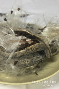 milkweed pod for sale. fae magic