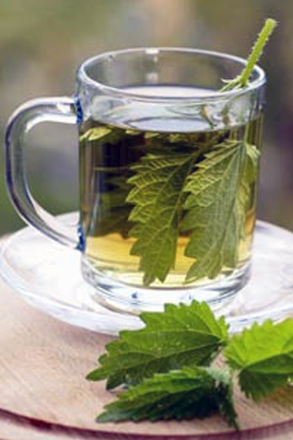 stinging nettle leaf tea