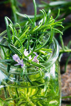 Load image into Gallery viewer, Organic Rosemary- Loose Rosemary Dried Herb (Rosmarinus officinalis) - Lizzy Lane Farm Apothecary