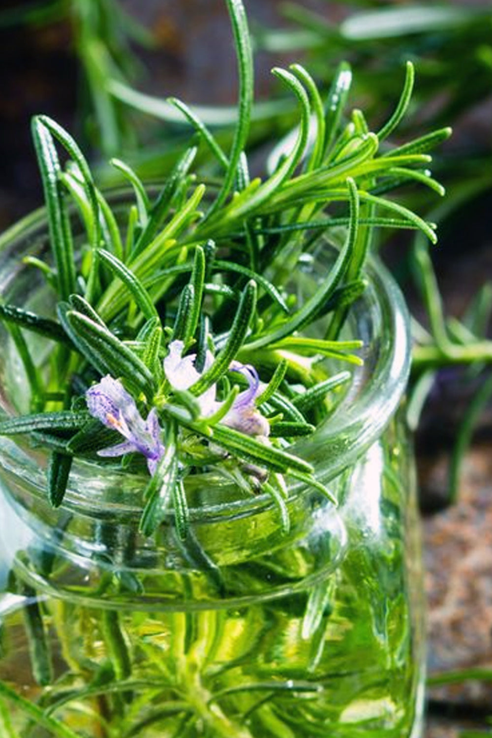 fresh herbs for lucid dreaming