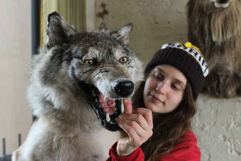 exaggerated snarly wolfy puppet with hinged jaw for a short film
