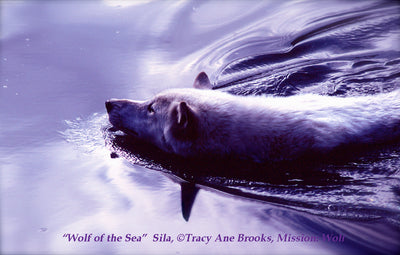 """Wolf of the Sea"" Metal Print by Tracy Ane Brooks (12""x18"")"