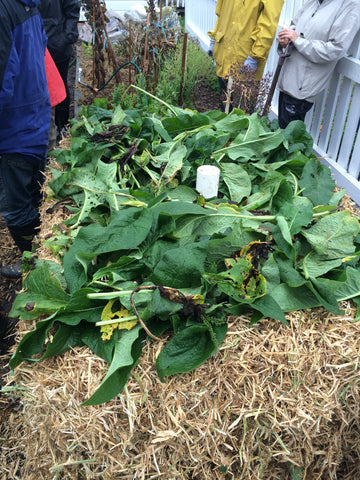 Adding comfrey leaves