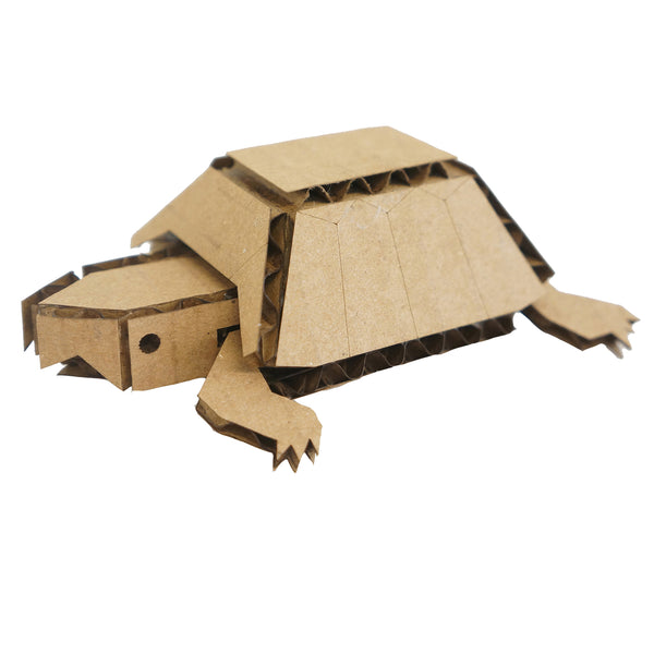 Box Turtle - Mini