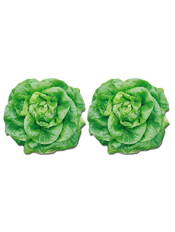 Fresh Butterhead Lettuce 1 Box ~470g