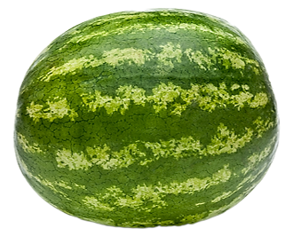 Watermelon Whole Big 1 Piece ~1.6kg