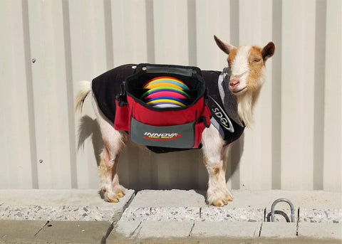 Birdie the goat with a disc golf bag over his back as a caddie for sabattus disc golf april fools