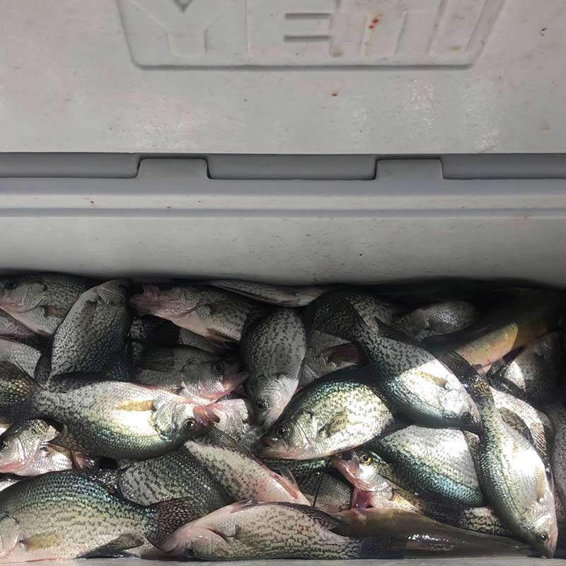 AHQ INSIDER Clarks Hill (GA/SC) Fall Fishing Report – Updated September 14